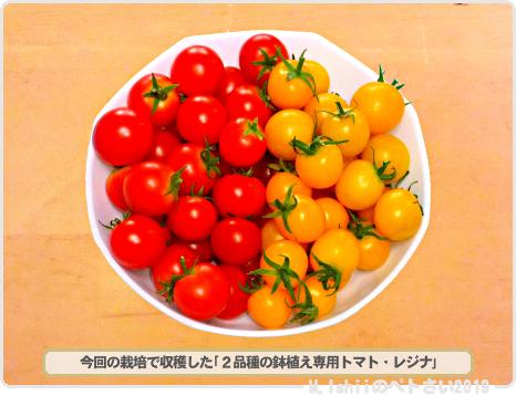 ペトさい(レジナ・Remake)44
