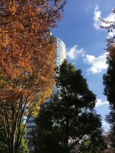 秋の六本木