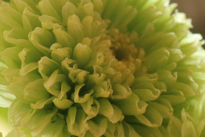 大見文化祭の日花瓶の花 30 11 11