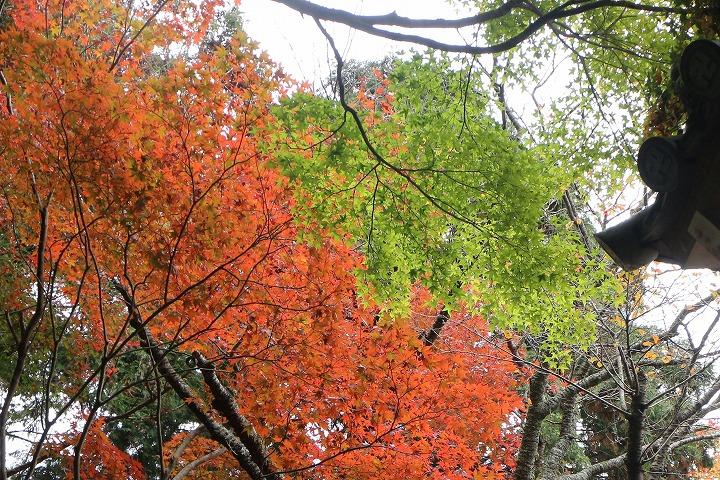 赤と緑が綺麗な紅葉もある 30 11 16