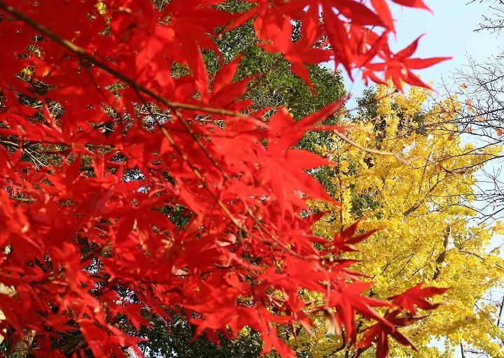大師堂東南 赤と黄色と緑の葉と 30 11 29
