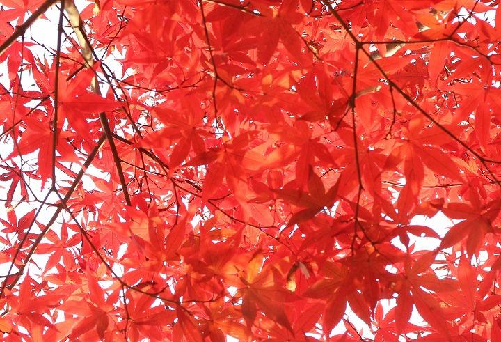 野村紅葉と太陽と 30 11 29