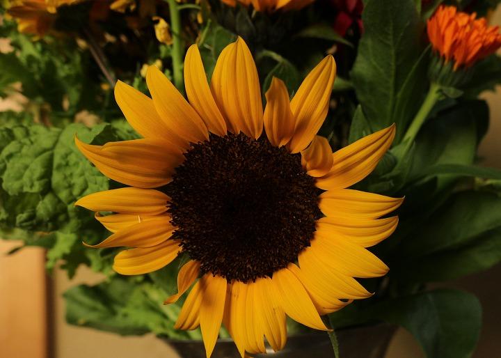 ヒマワリ いつもきれいな花が 30 12 20