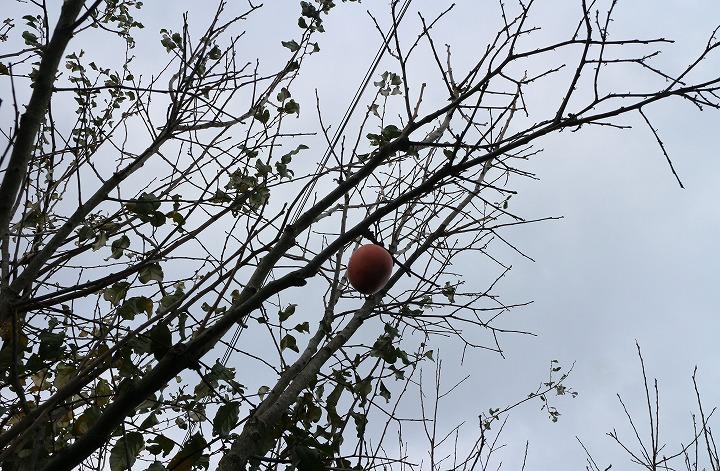 最後に残った一個の柿の実 30 12 27