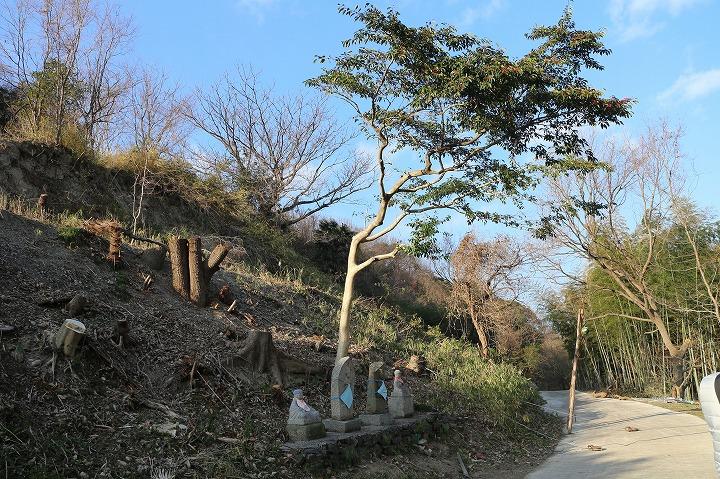 フユナリの木は残してもらえた 31 1 10