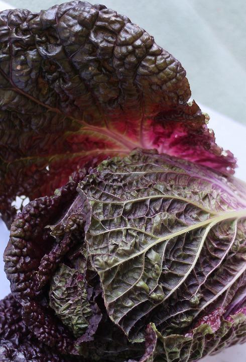 紫白菜葉の中も菜色です 31 1 11