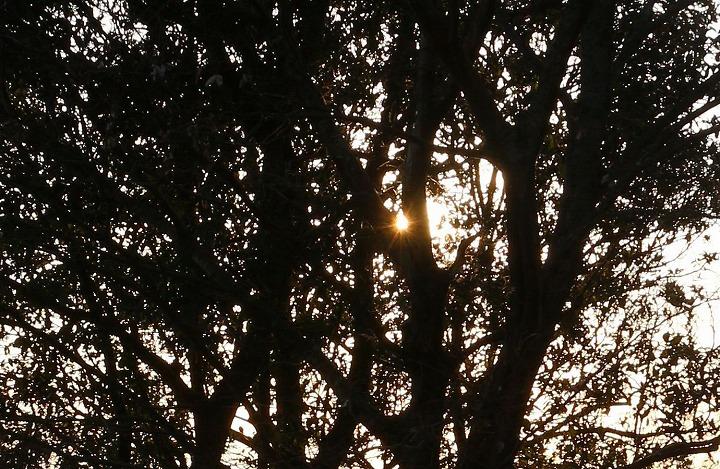 木の間から燧灘に沈む前の太陽 31 1 17