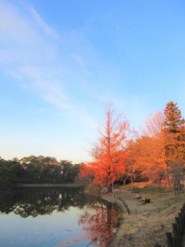 201  空大宮公園(1)