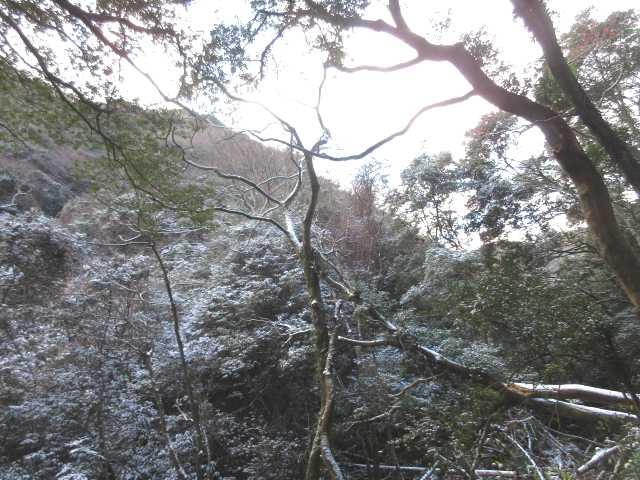 IMG0009JPG谷間の新雪