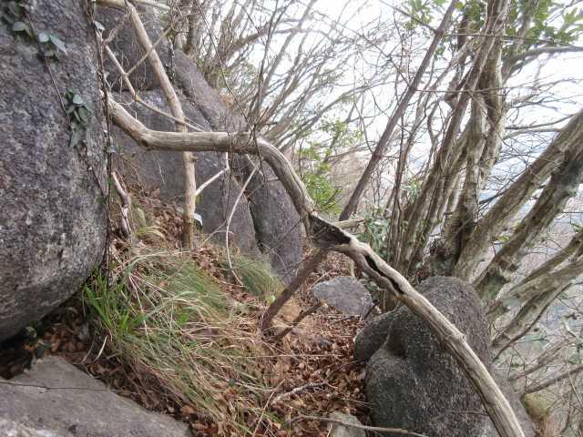 IMG0026JPG大岩と樹木