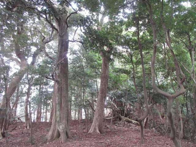 IMG0018JPG大木の多いコース