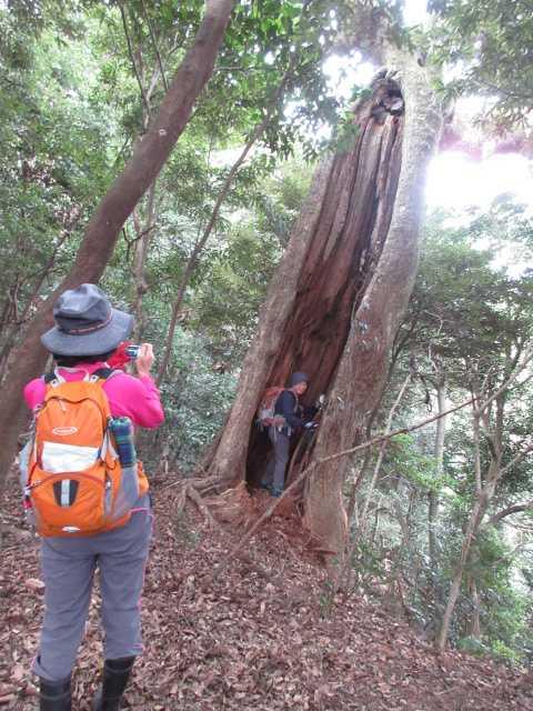 IMG0020JPG大木の穴