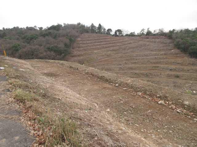 IMG0024JPG伐採された山