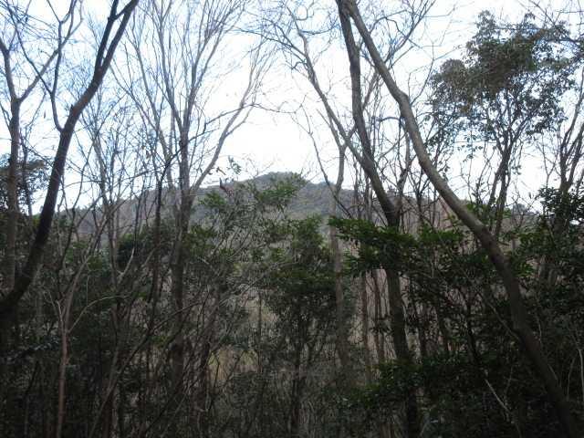 IMG0096JPG樹間に御許山