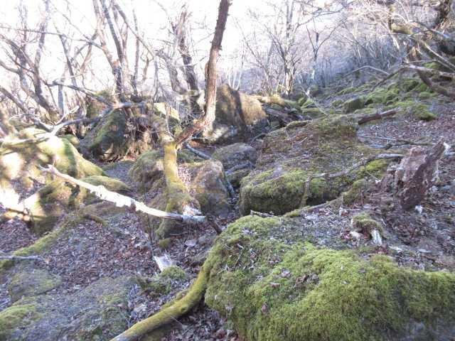 IMG0010JPG苔の岩場