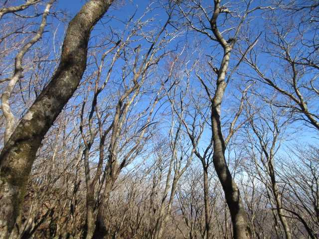 IMG0020JPG落葉樹林と青空