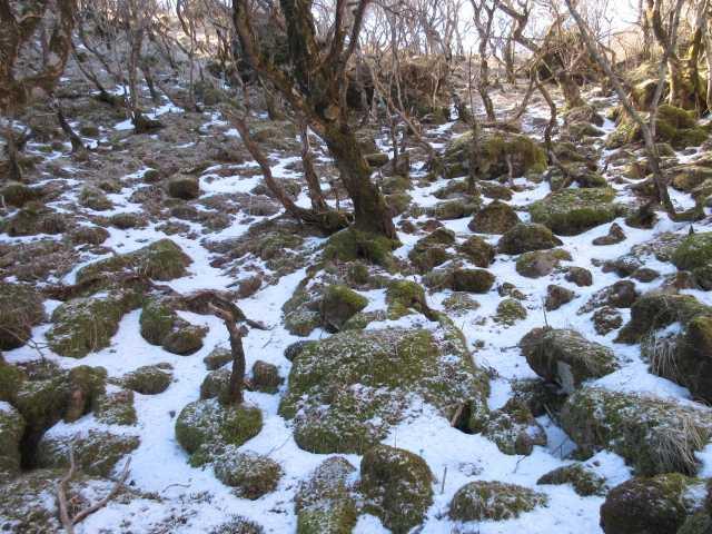 IMG0022JPG凍った残雪