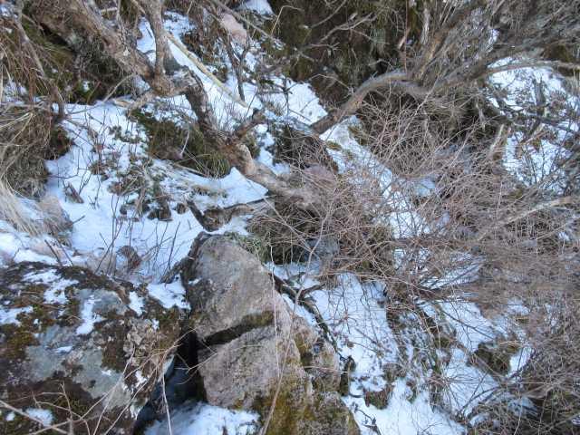IMG0065JPG滑る凍雪