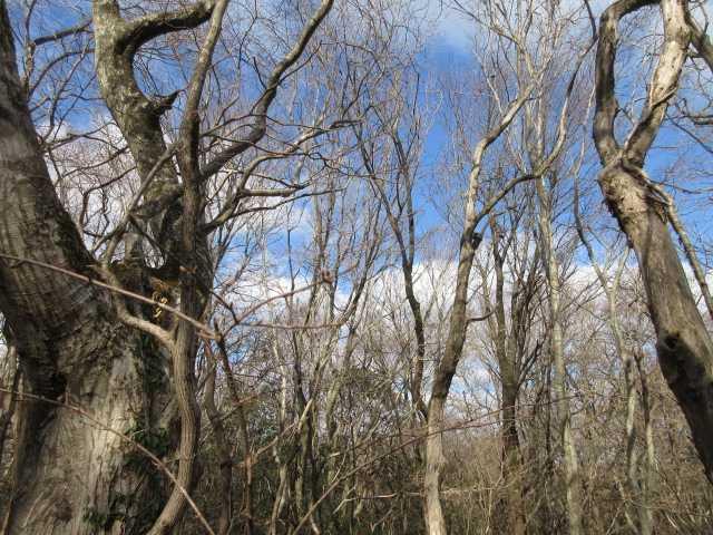 IMG0048JPG落葉の林