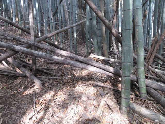 IMG0099JPG等覚寺竹林帯