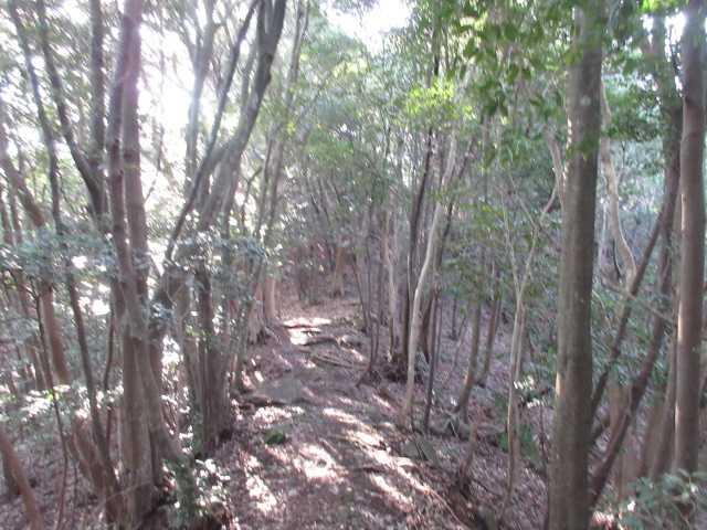 IMG0007JPG朝日の林