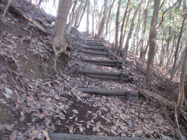 IMG0058JPG大半が偽木階段の登山道