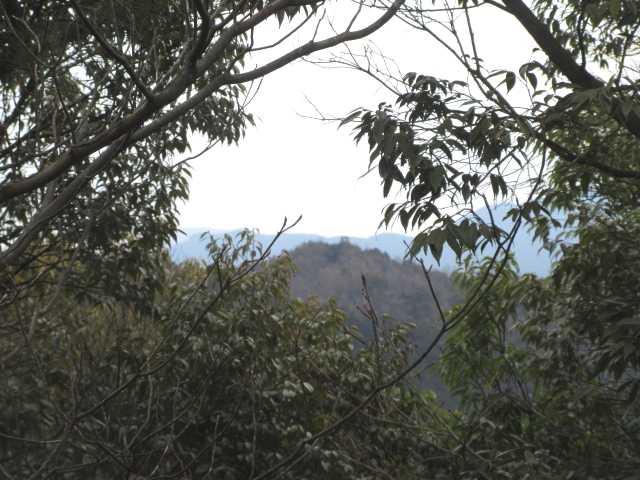 IMG0029JPG樹間に葛城山
