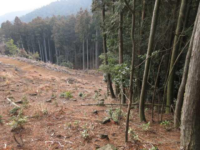 IMG0033JPG伐採境界を下る