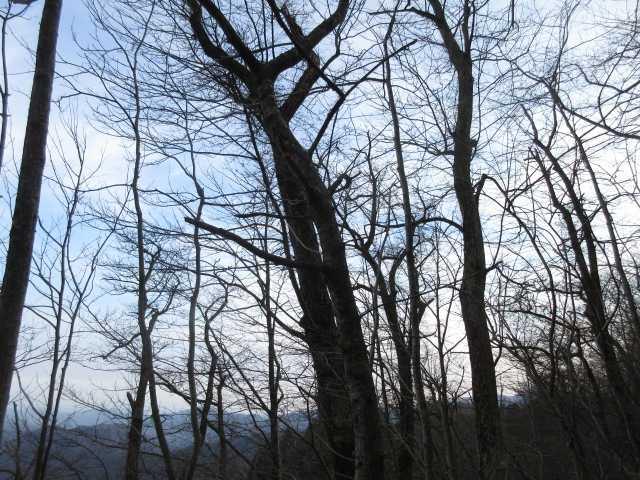 IMG0011JPGシオジの林