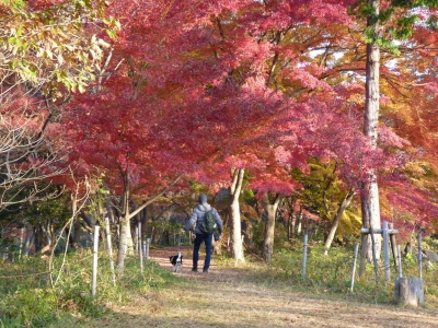 嵐山散歩3