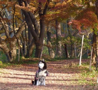 嵐山散歩4