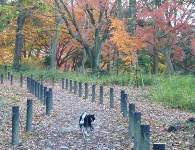 嵐山散歩5