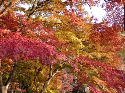 嵐山散歩7