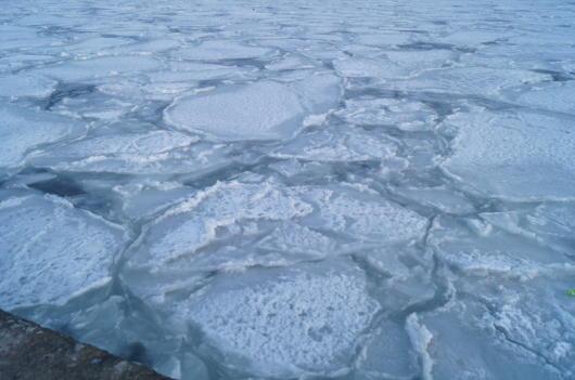 ハス葉氷2