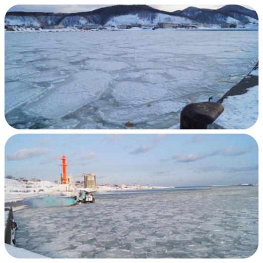 ハス葉氷4(1)