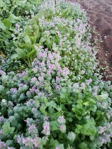 2018.11.29菜園11
