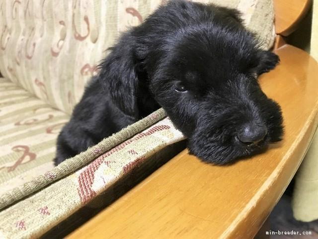 dog_img_3_f096770b2551[1]