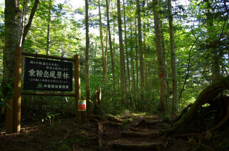 乗鞍岳風景林