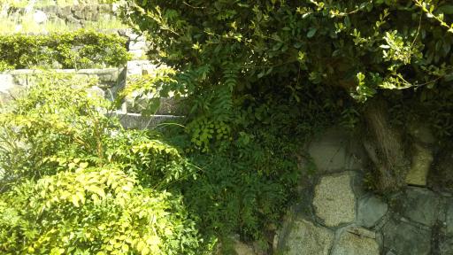 ブログ小豆島DSC_0069
