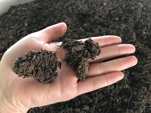 熟茶発酵3
