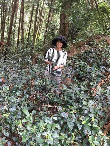 貴州省天鵝池野放茶―1