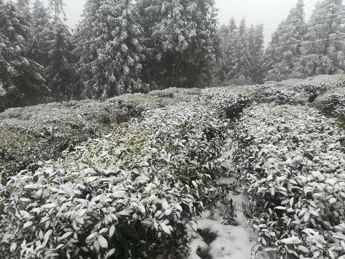 水東鎮冬1