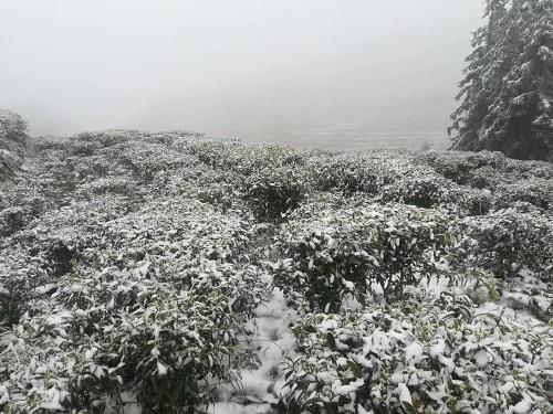 水東鎮冬2