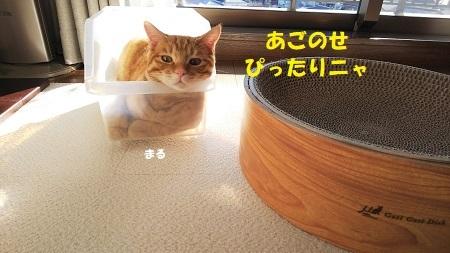 DSC_3803.jpg