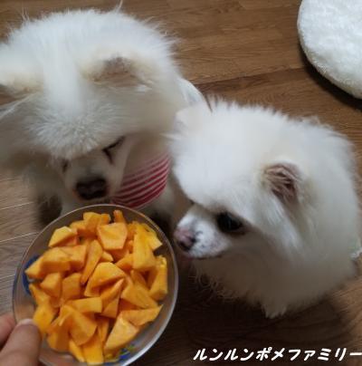 柿クンクン