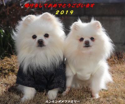 2019年賀ブログ