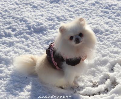 雪の上 お座り