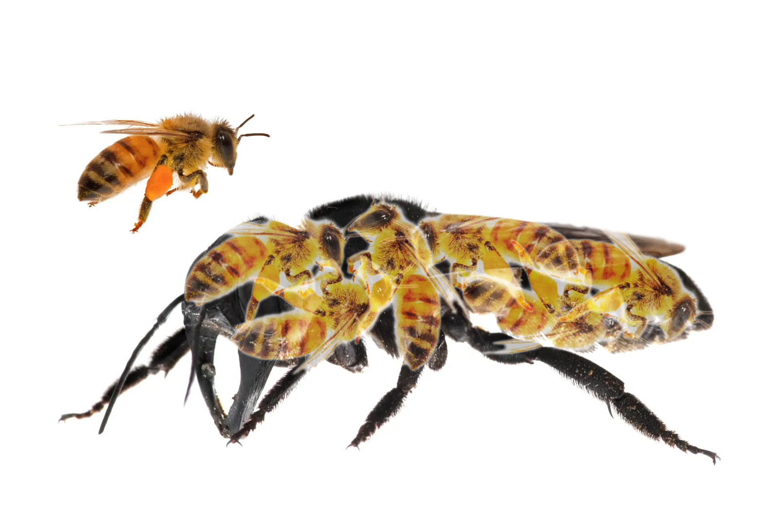 bee_x4.png