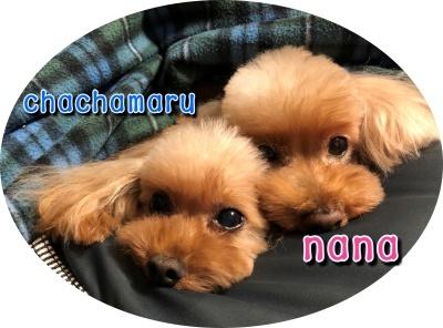 nana・chachamaru2018-12-1