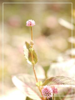 garden2018-137.jpg